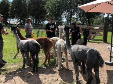 alpacas-meet-greet